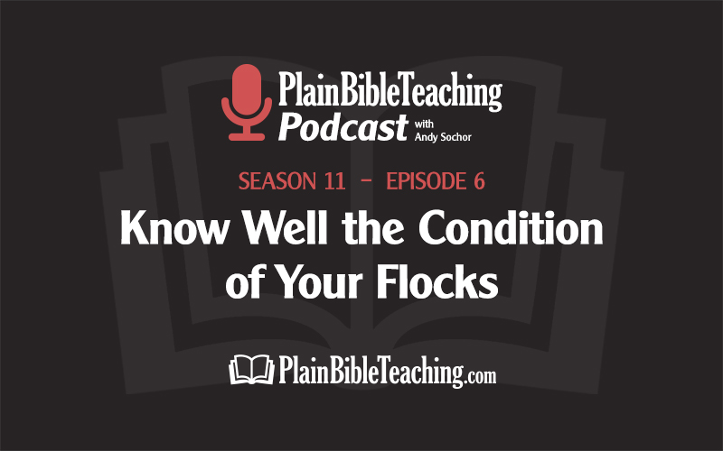Know Well the Condition of Your Flocks (Season 11, Episode 6)
