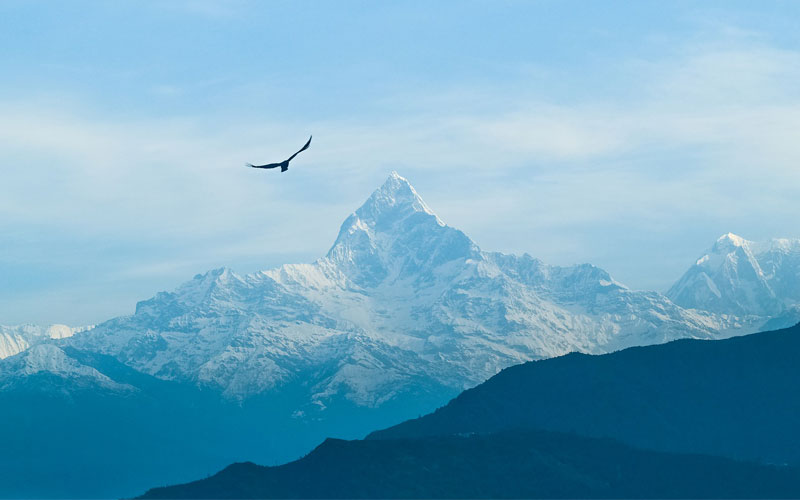 Mountain with Bird